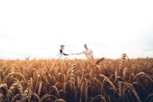 Как продать или купить землю сельхозназначения: план действий